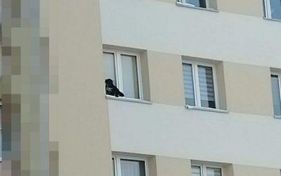 Pies na parapecie w Lubinie