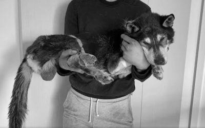 Pies sołtys Krzyżowa